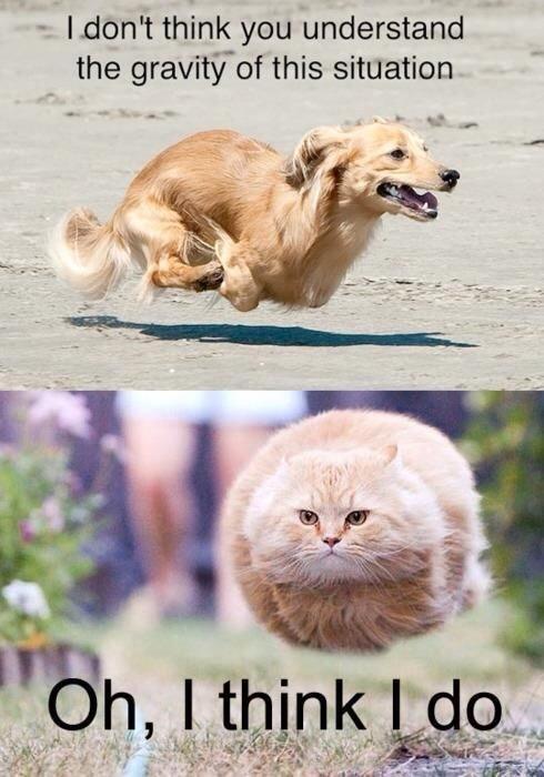 animal funny