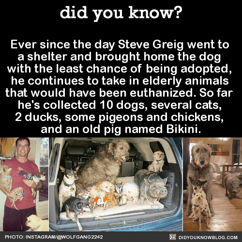 Ever since the day Steve Greig went to a shelter and brought home the dog with the least chance of being adopted, he continues to take in elderly animals that would have been euthanized. So far he's collected 10 dogs, several cats, 2 ducks, some pigeons and chickens, and an old pig named Bikini. SourceHAPPY PET DAY, TUMBLR!
