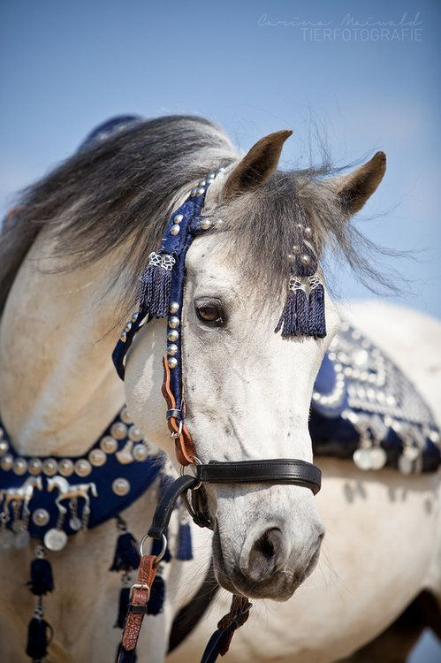 Horse/ jewelry mixzoom.com blog