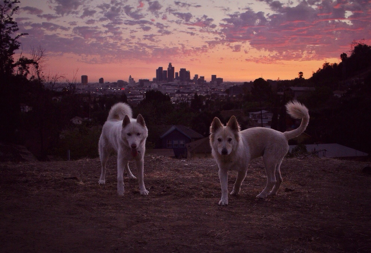 The wolf and lion of Lincoln Heights. Los Angeles, CA / September 2015