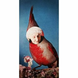 #oldbirds #geriatric #ornithology #collage #design #collage #art #red #surreal #surrealism #cutandpaste #birds #paper