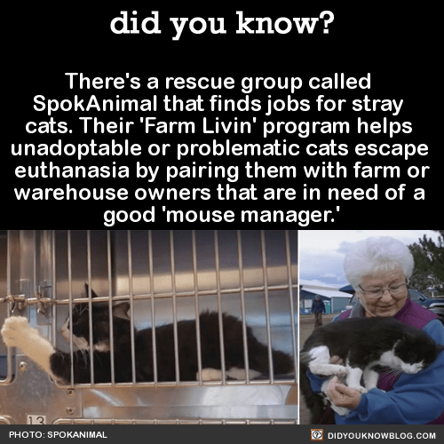 There's a rescue group called  SpokAnimal that finds jobs for stray  cats. Their 'Farm Livin' program helps  unadoptable or problematic cats escape  euthanasia by pairing them with farm or warehouse owners that are in need of a  good 'mouse manager.'  Source Source 2