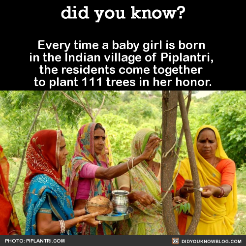 Every time a baby girl is born  in the Indian village of Piplantri,  the residents come together  to plant 111 trees in her honor.  Source Source 2 Source 3