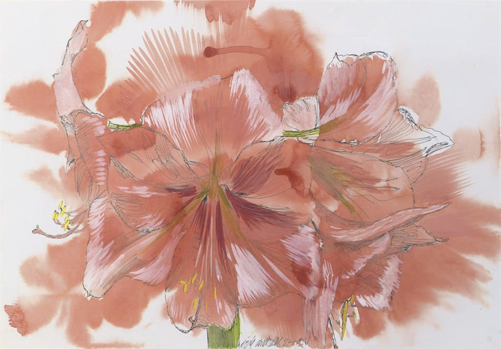 thunderstruck9:  Erik Andriesse (Dutch, 1957-1993), Amaryllis, 1992. Watercolour, gouache and ink on paper, 32 x 45.5cm.