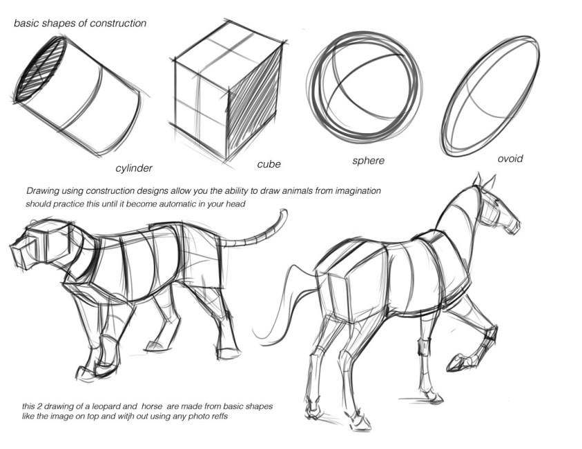 drawing animals tutorials art reference how to draw Animal ...