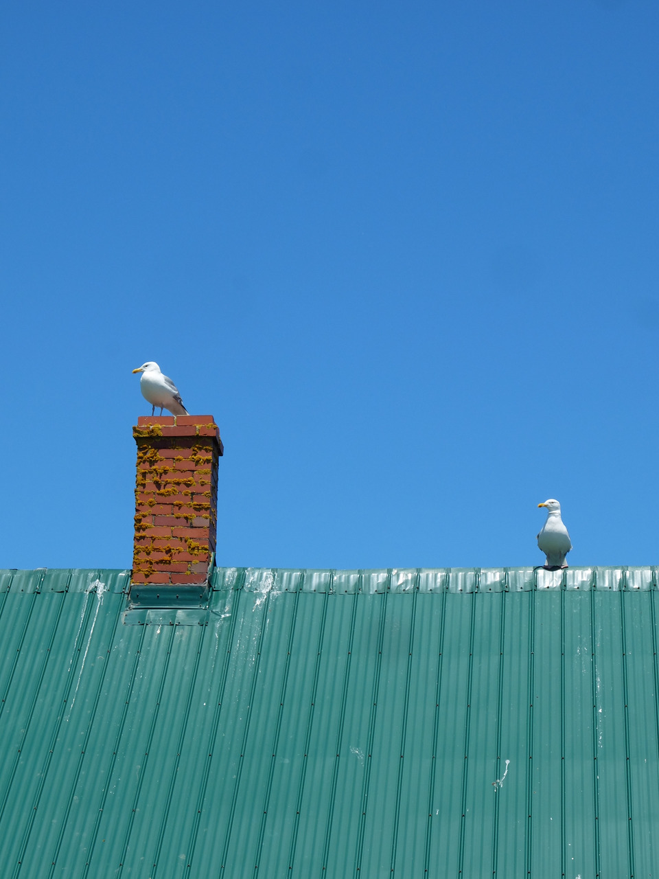 Travels: Grand Manan, New Brunswick. North Rock near Machias Seal Island