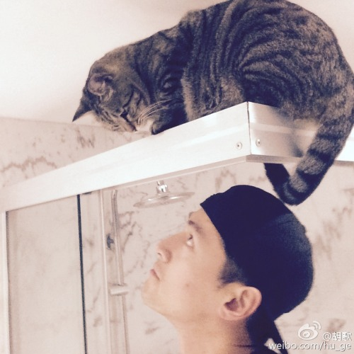 Hu Ge with cat