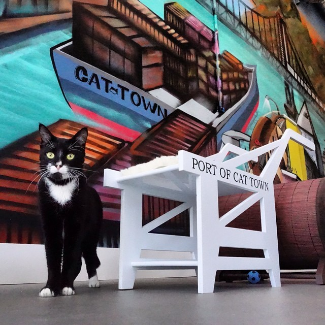 America's first permanent cat cafe is now open at 2869 Broadway in Oakland, CA! We're also expanding our Cat Zone, learn about that and help us fund the build out by donating at Saving Pets Challenge Fundraiser!The Cat Town Cafe is split into two rooms, the Cafe and the Cat Zone.<br /> The Cat Zone is where:<br /> We have between 6 - 20 free roaming cats who areavailable for adoption.Meaning, they are coming out of tiny cages of the shelter, and waiting to find a permanent home while here in our Cat Zone.<br /> We allow 14 people to enterevery hour on the hour, this is to help limit the stress and over stimulation of our four legged friends.<br /> Walk-ins are welcome, but wehighly recommendthat you make aCat Zone Reservationfor a $10 donation to Cat Town,especially on weekends!This willensure your visiting time is availableand support a great cause.<br /> You arewelcome to bring cafe food andbeverageinto the Cat Zone, but please don&rsquo;t bring your own cat!<br /> Volunteers will be on hand toanswer any questionsyou have about cats, adoptions, and cat related things.</p> <p>Please note:</p> <p>Catssleepa lot. They alsohidea lot. This is natural and healthy. Our cats meet up to140 peoplea day, 5 days a week. If you&rsquo;re itching for play time, werecommend coming early for the 10AM and 11AM hours, when the cats are most active.<br /> We are anon-profit rescuededicated to the safety and well-being of our cats. Their comfort and safety is ourfirst priority.<br /> Our cafe isminimal, but awesome. We serve extremely good pour over coffee from Bicycle Coffee, bagels from Authentic Bagel Company, and various treats from Rolling Sloane&rsquo;s.Plus, we have thefriendliestemployees you&rsquo;ll ever meet!We have limited indoor and outdoor seating, and viewing windows into the Cat Zone should we reach capacity.<br /> We areclosedMonday&amp;Tuesdayto acclimate new cats into the space and give our current residents some much deserved rest.<br /> Cat Townis a non-profit cat