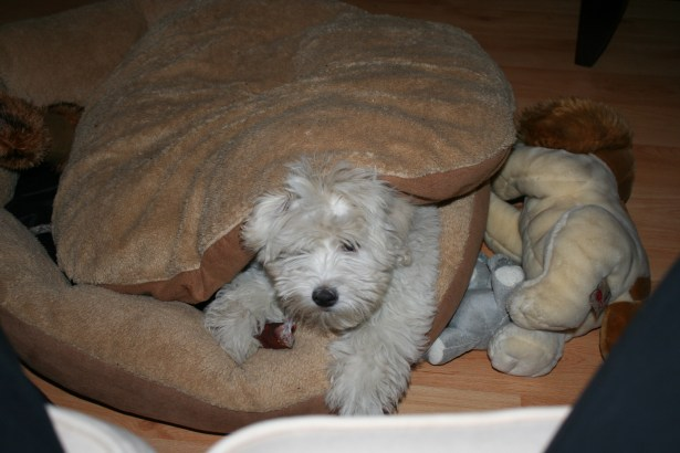 "The puppy in his ""den"""