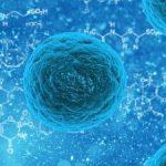iPS細胞