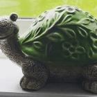 My Tortoise Spirit Animal