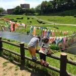 運河公園鯉のぼり