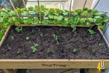 Hochbeet bepflanzen - die ersten Schritte