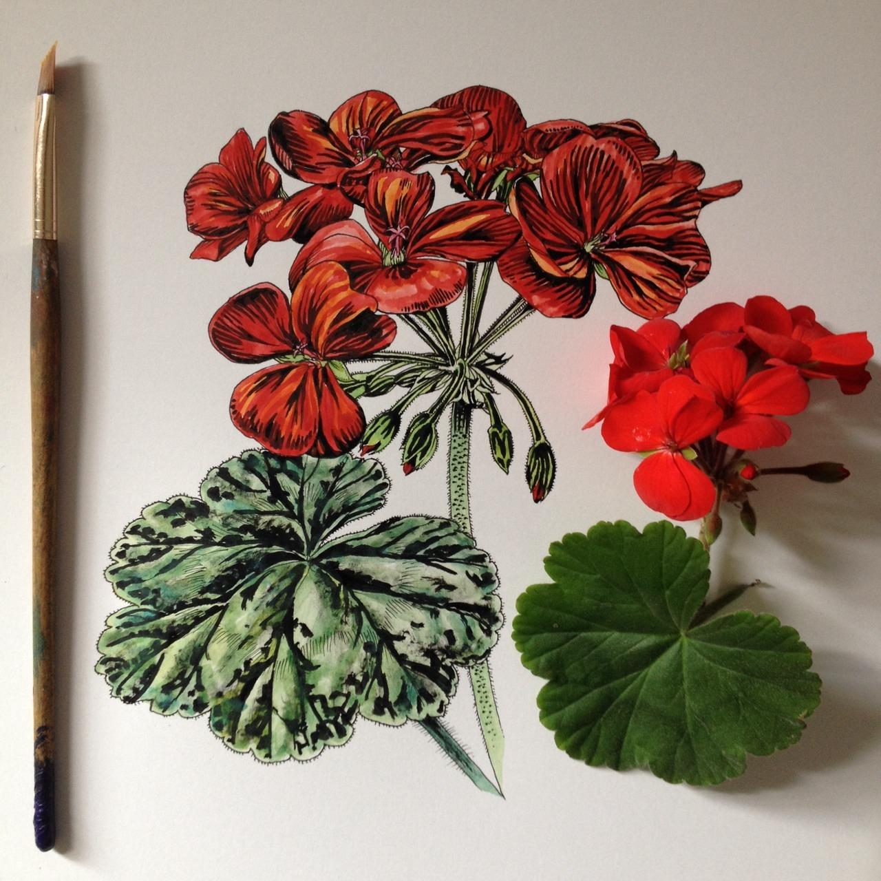 geranium color