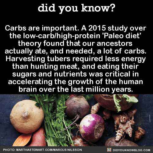 Carbs are important. A 2015 study over the low-carb/high-protein 'Paleo diet' theory found that our ancestors actually ate, and needed, a lot of carbs. Harvesting tubers required less energy than hunting meat, and eating their sugars and nutrients was critical in accelerating the growth of the human brain over the last million years. Source Source 2