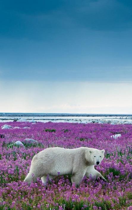 nature-planet:</p> <p>Beauty in Purple | Michael Poliza<br />