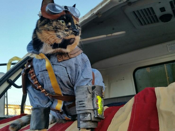 Fallout Cat July 4