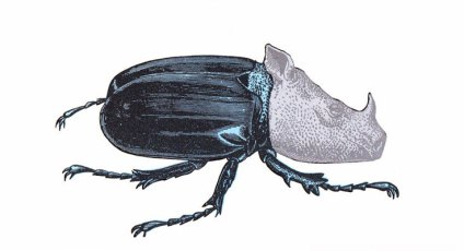 Rhino Beetle. Limited edition screenprint with hand made metallic inks on fabriano 5 paper. Produced for NOT-ANOTHER-BILL https://notanotherbill.com/shop/penelope-kenny-prints/