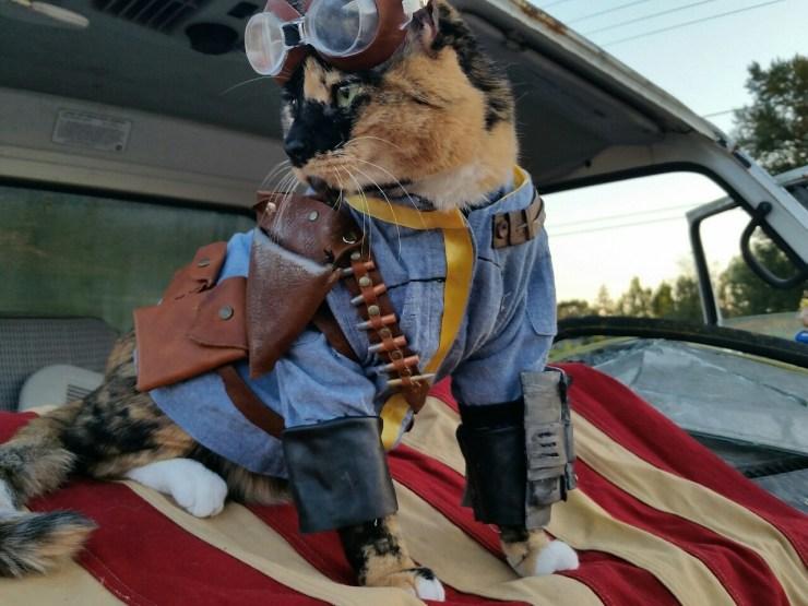 Fallout Cat July 4 - 02