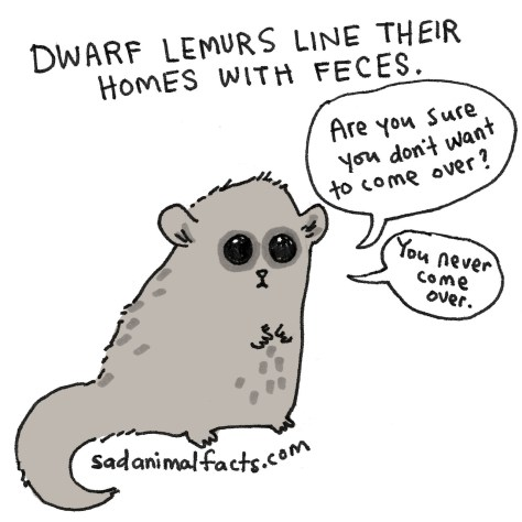 I've got some bad news about dwarf lemurs.