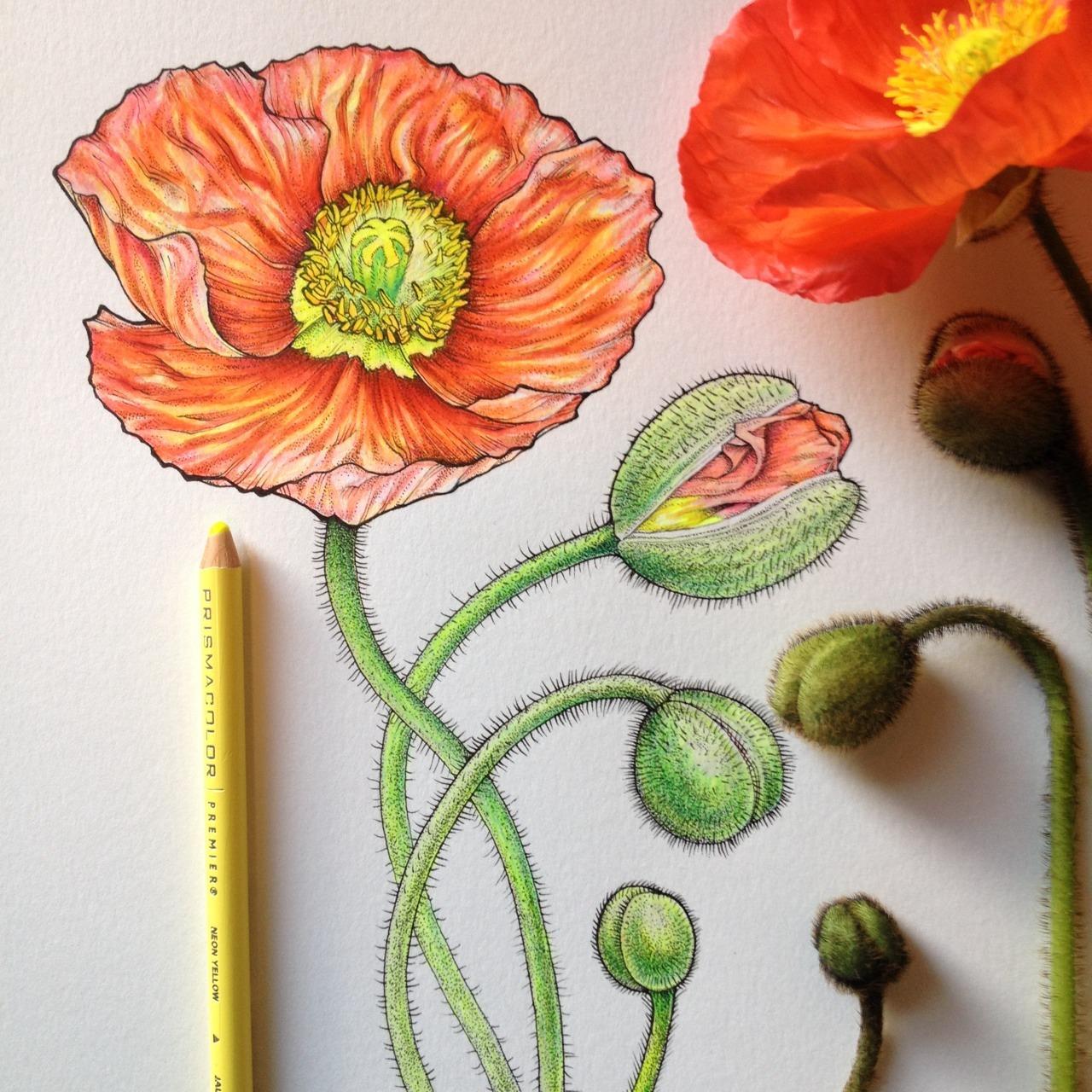 Poppy, Step 2