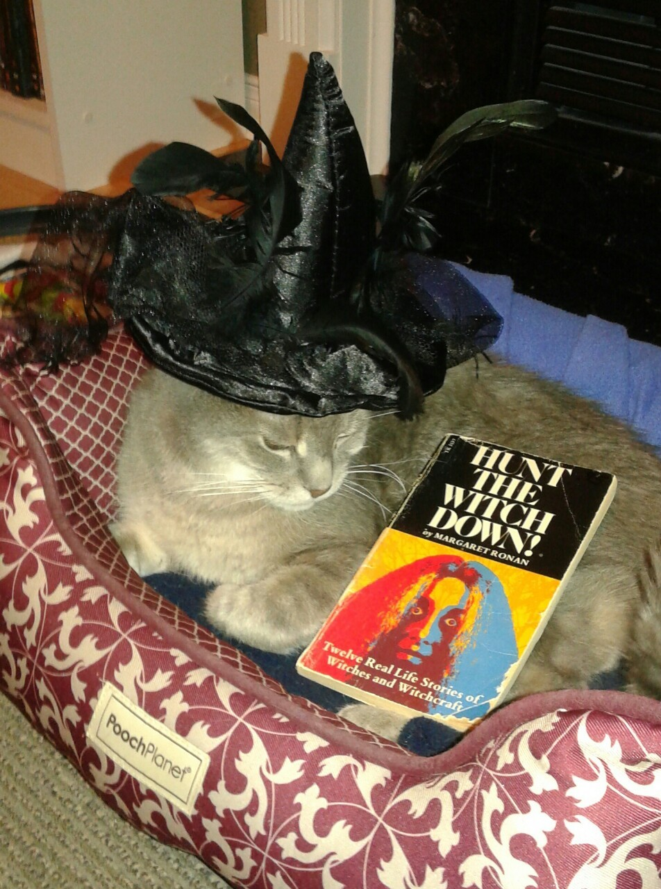 I think my cat might be a witch…