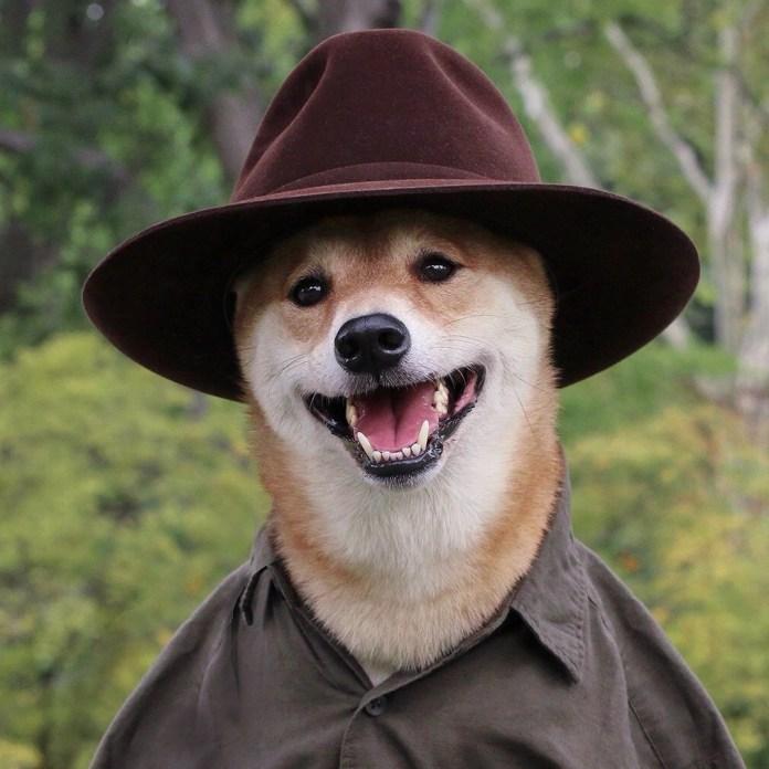 THE MENSWEAR DOG