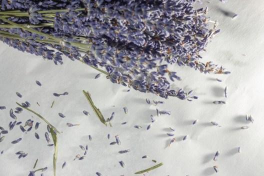 loose lavender