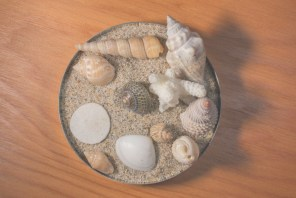specimen tin with shell collection - the sea