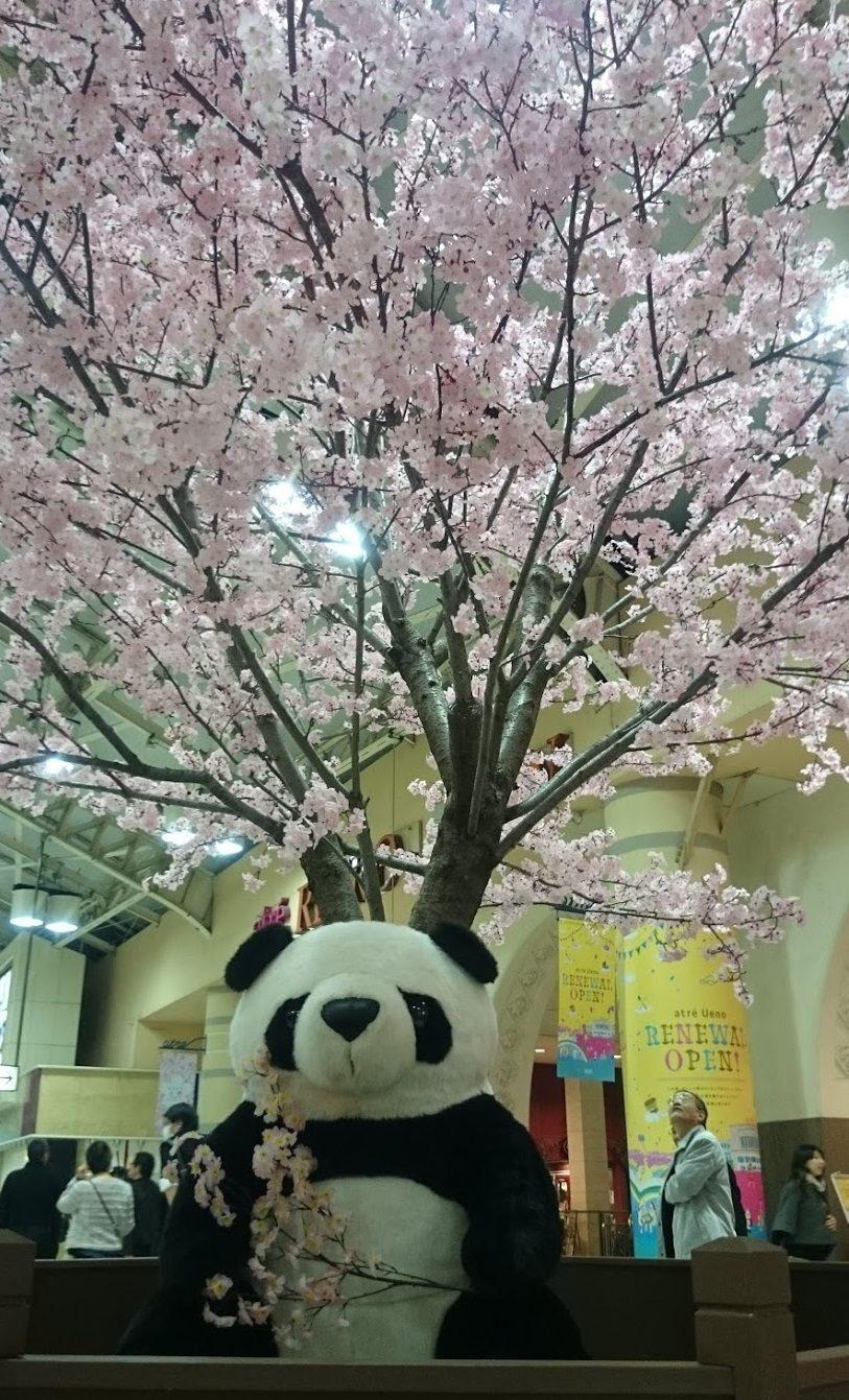 上野駅にてパンダと桜のコラボレーション