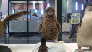 南極・北極科学館のペンギンがかわいい