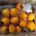 内子柿の袋をあける