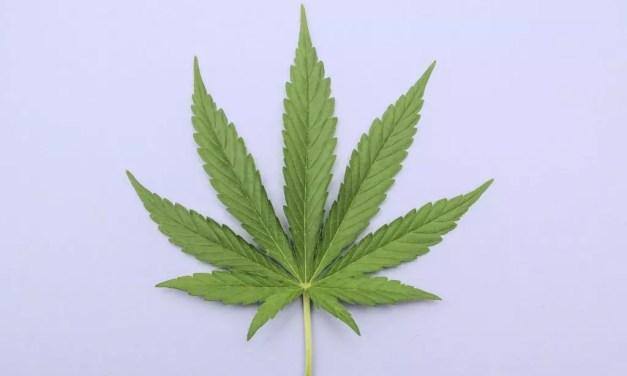 Temperature Control-Heat Settings For Marijuana.