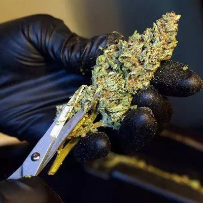 Weed Grind 2