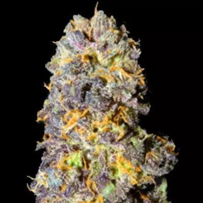 Trix Marijuana Strain Review