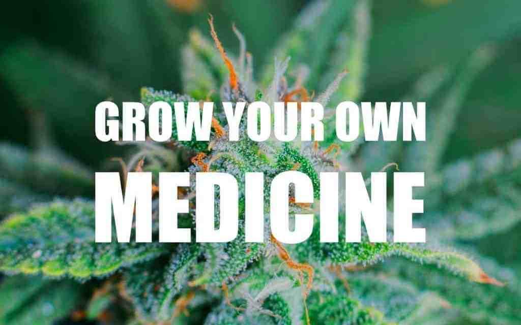 Marijuana Grow Kit Review- By Cash Crop