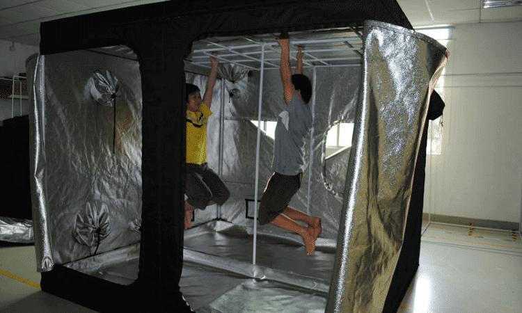Best Grow Tent for growing cannabis 2021