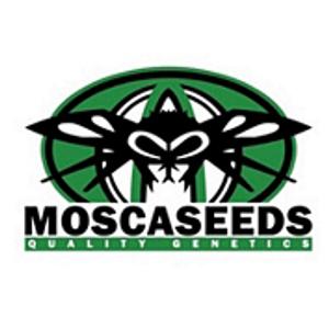 Mosca Seeds Promo Seedsman Promo