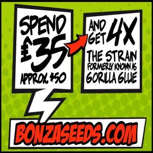 Gorilla Glue Cannabis Seeds Bonza Seeds Promo