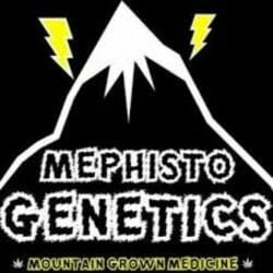 Mephisto Genetics Seedsman Promotion