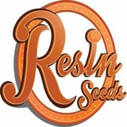 Resin Seeds Seed City Discount Sale