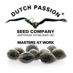 Dutch Passion Seeds Seedsman Promo