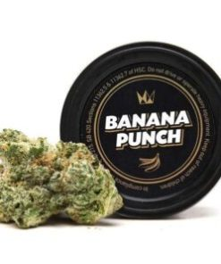 banana punch for Sale, banana punch Strain for Sale, banana punch West Coast Cure for Sale, Buy banana punch, buy banana punch Strain, Buy banana punch Strain by West Coast Cure, Buy banana punch Strain West Coast Cure, Buy banana punch West Coast Cure, buy West Coast Cure banana punch, buy west coast cure banana punch online, buy west coast cure online, Order banana punch Strain, Order banana punch West Coast Cure, order west coast cure banana punch, PURCHASE banana punch WEST COAST CURE, Shop banana punch West Coast Cure, west coast cure, west coast cure banana punch, west coast cure banana punch for sale, west coast cure for sale, Where to Buy banana punch Strain, Where to Buy banana punch West Coast Cure