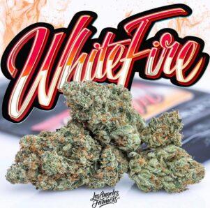 buy jungle boys white fire online, buy White fire Jungleboys, Cheap White fire Jungleboys, jungle boys, jungle boys strain, jungle boys weed, jungle boys weed strain, Jungle boys white fire, JUNGLE BOYS WHITE FIRE OG, Jungleboys for sale USA, Order White fire Jungleboys, Purchase White fire Jungleboys, White Fire Jungleboys delivery, White fire Jungleboys for sale, White Fire Jungleboys wholesale