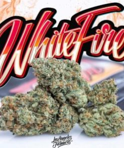 buy jungle boys white fire online, buy White fire Jungleboys, Cheap White fire Jungleboys, jungle boys, jungle boys strain, jungle boys weed, jungle boys weed strain, Jungle boys white fire, JUNGLE BOYS WHITE FIRE OG, Jungleboys for sale USA, Order White fire Jungleboys, Purchase White fire Jungleboys, White Fire Jungleboys delivery, White fire Jungleboys for sale, White Fire Jungleboys wholesale