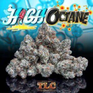 buy Jungle Boys High Octane online, buy weed packs online, heirloom og, hi octane fuel, hi octane orange, hi octane pills, hi-octane, high octain, high octane, high octane concentrates, high octane image, high octane og, high octane og all bud, high octane og genetics, high octane og leafly, high octane og lineage, high octane og sc labs, high octane og strain, high octane og strain info, high octane og strain leafly, high octane og strain review, high octane og x gelato, high octane og x gelato 33 review, hioctane, jungle boys, jungle boys bags, jungle boys carts, jungle boys clothing, jungle boys dispensary, jungle boys extracts, jungle boys high octane, jungle boys high octane og, Jungle Boys High Octane online, jungle boys instagram, jungle boys packaging, jungle boys seeds, jungle boys seeds for sale, jungle boys strain, jungle boys strains, jungle boys wedding cake, octane review, og kush high, orange octane, weed packs for sales, weed packs online