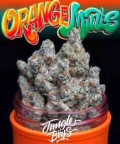buy Jungle Boys Orange Mints #6 online, buy jungle boys orange mints online, jungle boys, jungle boys bags, jungle boys carts, jungle boys clothing, jungle boys dispensary, jungle boys extracts, jungle boys instagram, jungle boys orange mints, Jungle Boys Orange Mints #6 for sale, Jungle Boys Orange Mints #6 online, jungle boys orange mints strain, jungle boys packaging, jungle boys prices, jungle boys seeds, jungle boys seeds for sale, jungle boys strain, jungle boys strains, jungle boys wedding cake, jungle boys weed, jungle boys weed strain, jungle flower orange mints strain, orange kush mints strain, orange mint cookies strain, orange mints, orange mints strain, order Jungle Boys Orange Mints #6 online, purchase Jungle Boys Orange Mints #6 online, the jungle boys