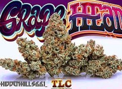 buy Jungle Boys Grape Head online, buy jungle boys weed packs online, buy weed packs online, jungle boys, jungle boys bags, jungle boys carts, jungle boys clothing, jungle boys dispensary, jungle boys extracts, Jungle Boys Grape Head for sale, Jungle Boys Grape Head online, jungle boys instagram, jungle boys packaging, jungle boys prices, jungle boys seeds, jungle boys seeds for sale, jungle boys strain, jungle boys strains, jungle boys wedding cake, jungle boys weed, jungle boys weed packs for sale, jungle boys weed strain, order Jungle Boys Grape Head online, the jungle boys, weed packs for sale