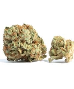 BUY TAHOE OG KUSH STRAIN ONLINE, Buy Tahoe OG near you, Buy Tahoe OG Online, buy tahoe og strain online, TAHOE OG KUSH, Tahoe OG Kush Marijuana Strain, TAHOE OG KUSH STRAIN, TAHOE OG KUSH STRAIN FOR SALE, tahoe og strain, tahoe og strain allbud, tahoe og strain flowering time, tahoe og strain genetics, tahoe og strain information, tahoe og strain sativa or indica, tahoe og strain seedfinder, tahoe og strain seeds, tahoe og strain thc, tahoe og strain type