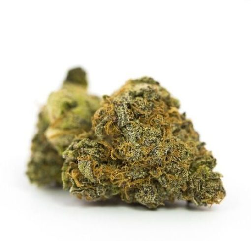 best quality cannabis, best quality marijuana, buy cannabis in germany, buy cannabis online, buy gg4 marijuana online, buy gg4 marijuana online free shipping, buy gg4 marijuana online shop, buy gg4 marijuana online stores, BUY GORILLA #4, BUY GORILLA GLUE #4 ONLINE, BUY GORILLA GLUE #4 STRAIN, BUY GORILLA GLUE MARIJUANA, Buy Gorilla glue online, BUY GORILLA GLUE STRAIN, buy indica strains, buy kush online, Buy marijuana, buy marijuana in austria, buy marijuana in california, buy marijuana in canada, buy marijuana in denver, buy marijuana in europe, buy marijuana in the usa, buy marijuana in uk, buy marijuana online, Buy Medical Marijuana Online, buy weed online, cannabis for sale, cannabis for sale in uk, Gorilla Glue, gorilla glue bud review, Gorilla glue for sale, gorilla glue marijuana near me, gorilla glue marijuana review, gorilla glue marijuana strain, gorilla glue marijuana strain review, gorilla glue marijuanas, gorilla glue thc strain, gorilla glue weed near me, gorilla glue weed strain, gorilla glue weed strain allbud, gorilla glue weed strain effects, gorilla glue weed strain info, gorilla glue weed strain side effects, gorilla glue weed strain type, hybrid strain, i need marijuana, indica strain, kush for sale near me, marijuana for sale, marijuana for sale in europe, marijuana for sale in usa, marijuana for sale near me, Marijuana for sale online, marijuana prices, medical marijuana for sale, sativa strain, where to buy cannabis in germany, Where To Buy Cannabis Online, where to buy marijuana, where to buy marijuana in new york, where to buy marijuana in uk, where to buy marijuana near me, Where To Buy Marijuana Online, where to buy medical marijuana online